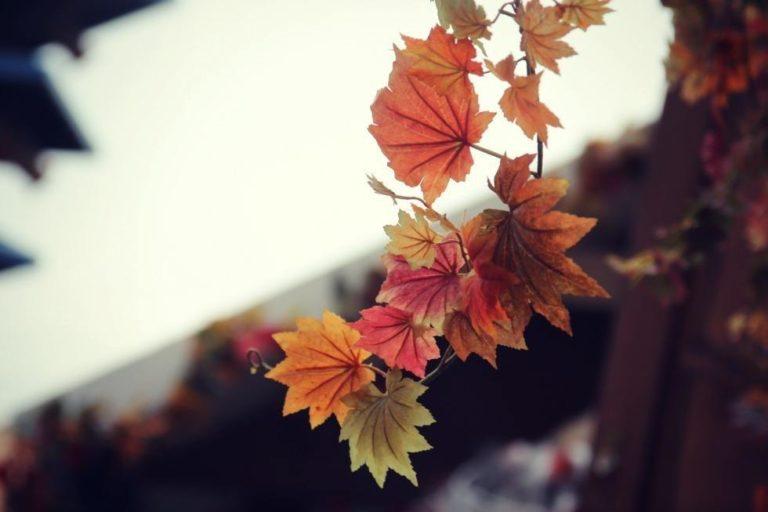 Hvad skal vi lave i efterårsferien? 10 skønne efterårsplaner 10
