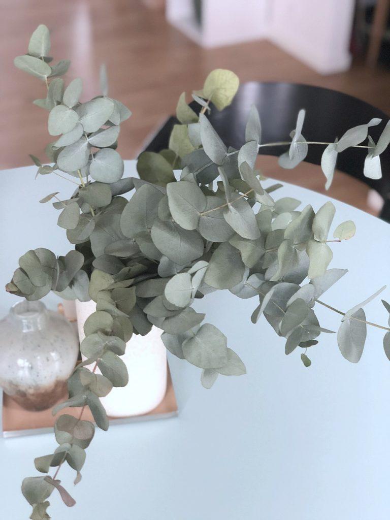 Eucalyptus grene: Til alle os, der IKKE har grønne fingre 5